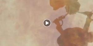 67allamericanvideo